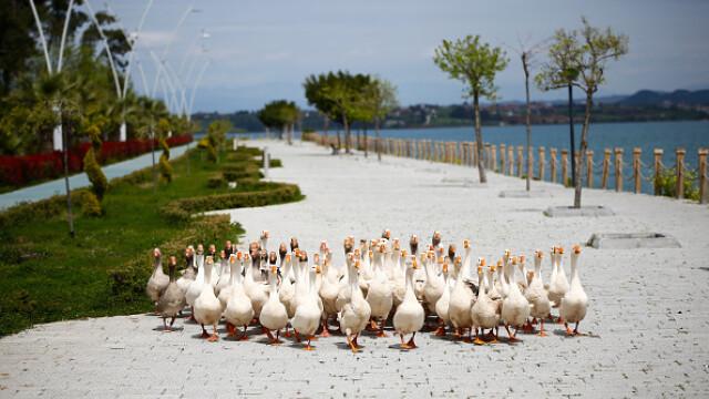 """GALERIE FOTO. Animalele umblă libere pe străzi în """"epoca"""" coronavirusului - Imaginea 10"""