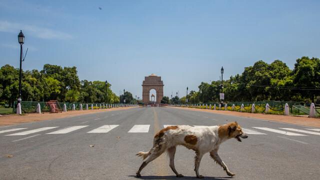 """GALERIE FOTO. Animalele umblă libere pe străzi în """"epoca"""" coronavirusului - Imaginea 8"""