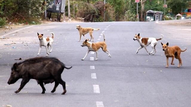 """GALERIE FOTO. Animalele umblă libere pe străzi în """"epoca"""" coronavirusului - Imaginea 7"""
