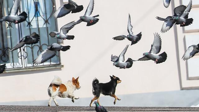 """GALERIE FOTO. Animalele umblă libere pe străzi în """"epoca"""" coronavirusului - Imaginea 6"""