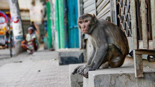 """GALERIE FOTO. Animalele umblă libere pe străzi în """"epoca"""" coronavirusului - Imaginea 5"""