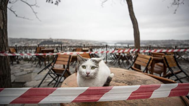 """GALERIE FOTO. Animalele umblă libere pe străzi în """"epoca"""" coronavirusului - Imaginea 4"""