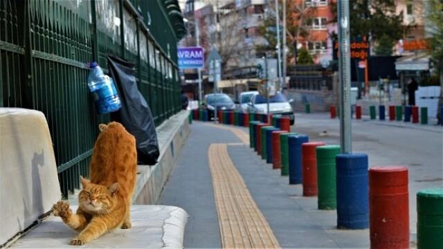 """GALERIE FOTO. Animalele umblă libere pe străzi în """"epoca"""" coronavirusului - Imaginea 2"""