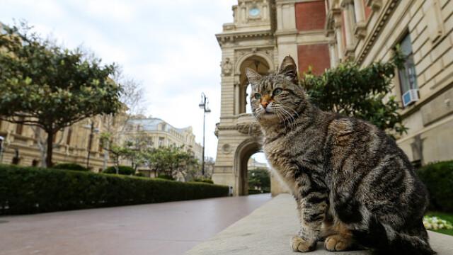 """GALERIE FOTO. Animalele umblă libere pe străzi în """"epoca"""" coronavirusului - Imaginea 1"""