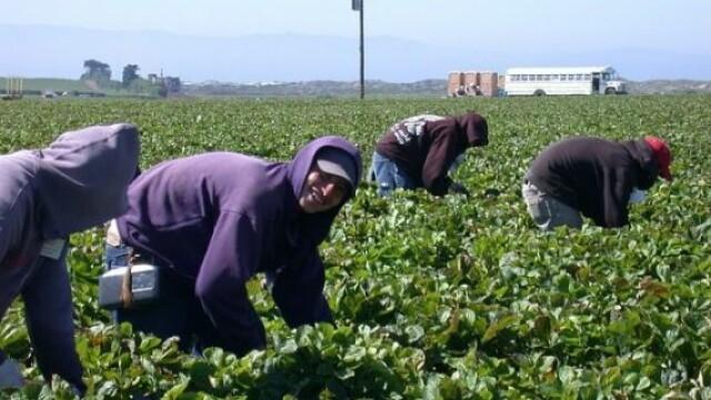 Muncitori in agricultura
