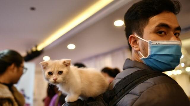 Studiu: Pisicile se pot infecta cu noul coronavirus. Cum sunt acestea afectate
