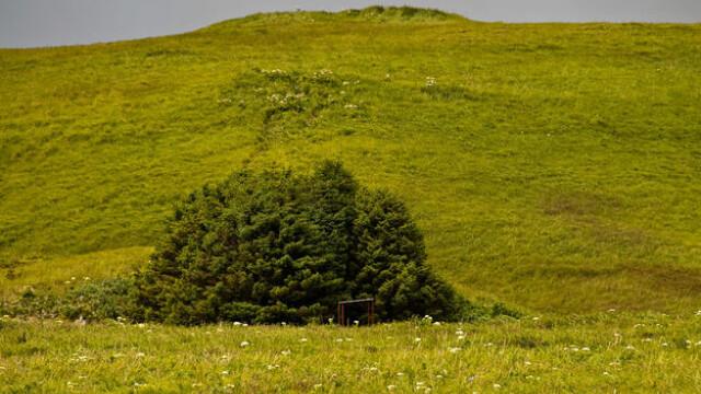 padure cu 33 de copaci