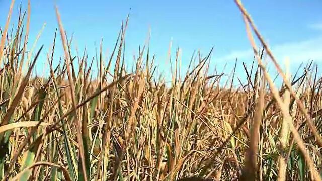 Despăgubiri pentru aproape 35.000 de fermieri afectați de secetă. Când vor fi făcute plățile