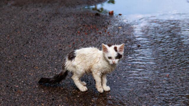 O adolescentă a aruncat o pisică de la balcon, în Bacău. Ce pedeapsă a primit