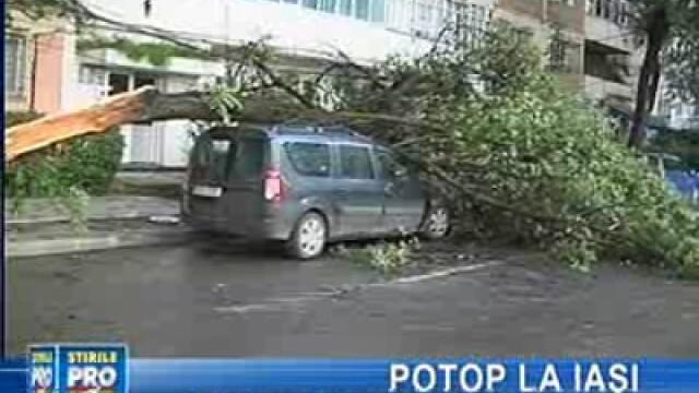 Vijelia a doborât copacii peste maşinile parcate