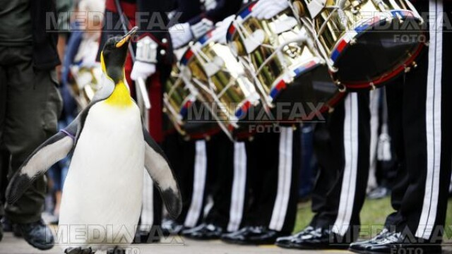 Pinguinul Sir