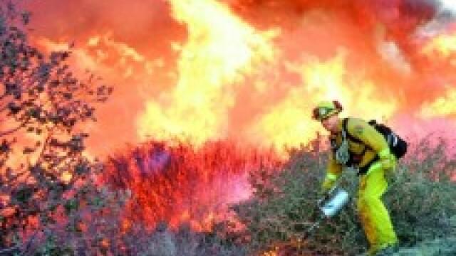 Incendiu violent la Lugoj. Zece hectare de miriste, cuprinse de flacari