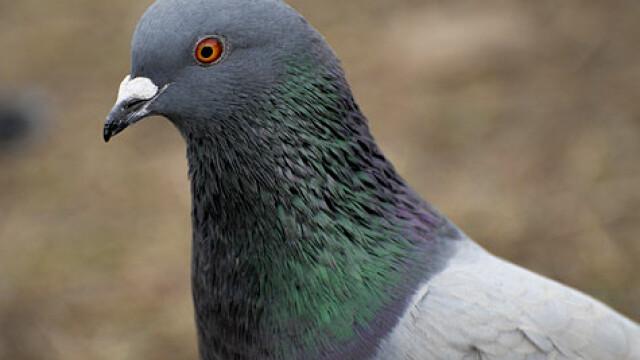 Amenda uriaşă primită de o femeie pentru că a hrănit un porumbel. FOTO