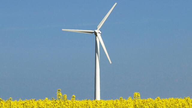 Centrale eoliene proprii, in gradina casei! Se intampla in Danemarca