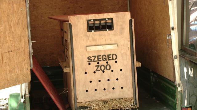 Gradina Zoologica din Timisoara are un nou membru: Otto, un tapir de 11 luni - Imaginea 3