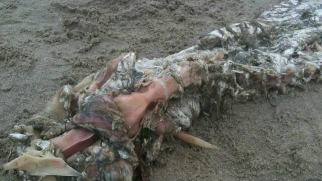 Un pescar din Mexic sustine ca a descoperit un monstru marin: