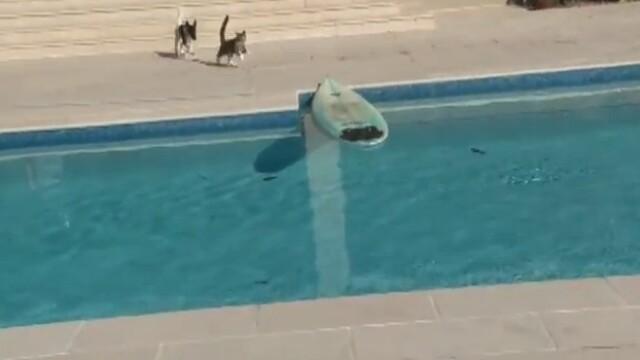 Cea mai inventiva solutie a unei pisici pentru a scapa de un caine care o urmareste. VIDEO