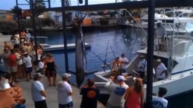 O femeie a pescuit un peste de 460 de kilograme. Motivul banal pentru care nu a stabilit un record