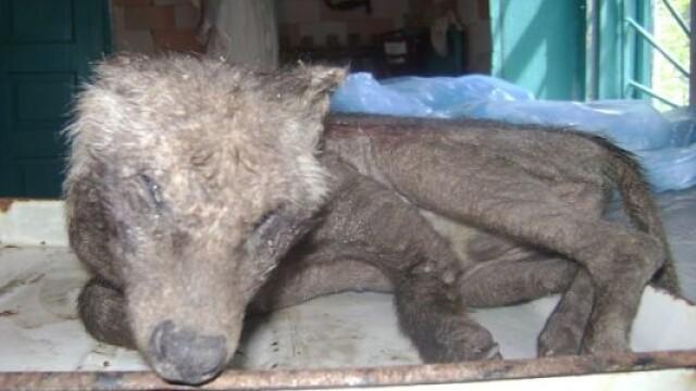 Animalul mutant sau hibrid: creatura bizara impuscata de vanatori.