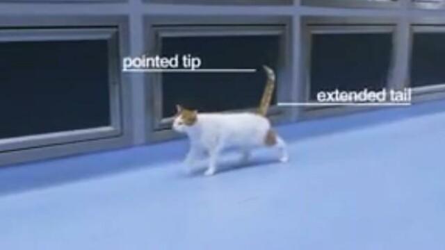 Secretele din spatele gesturilor pe care le fac felinele, dezvaluite intr-un videoclip