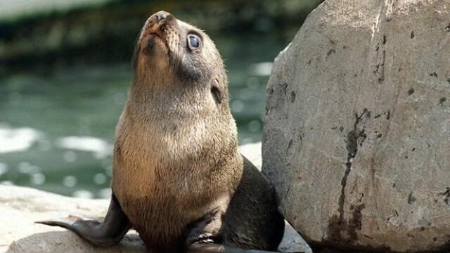 Incident revoltator la o gradina zoologica. Ce a facut un angajat in timp ce cantarea o foca