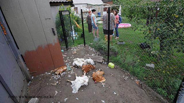 Satenii din sud-estul Rusiei se plang ca sunt atacati de Chupacabra. \
