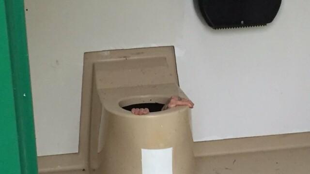 blocat in toaleta - FB