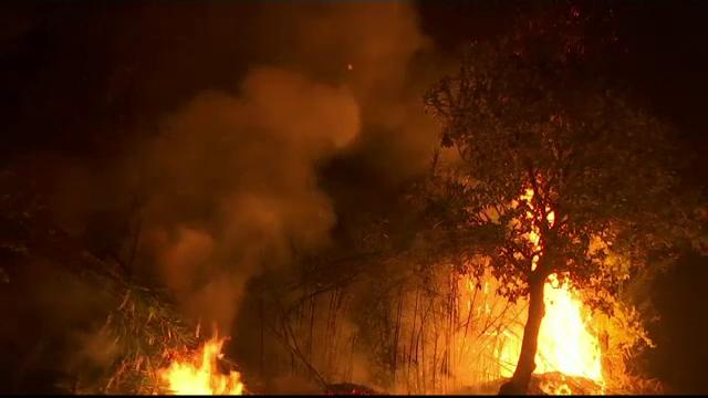 incendii vegetatie portugalia
