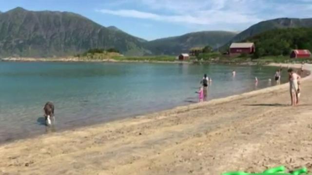 Căldura face ravagii în Europa. Un ren a fost surprins în Norvegia în timp ce se răcorea în mare
