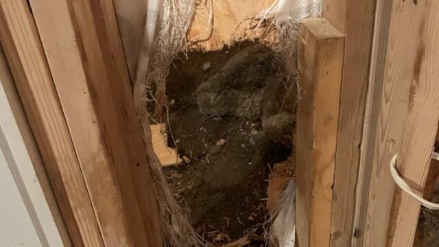Imagini virale cu prăpădul făcut de un urs într-o casă. Ce a făcut ca să iasă - 1