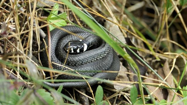 Un bărbat din Vâlcea a fost mușcat de un șarpe