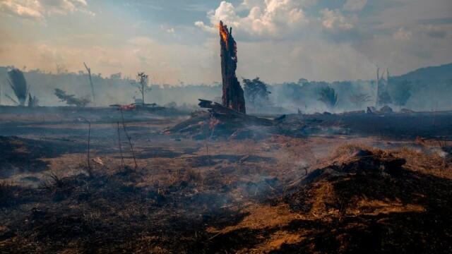 Imaginea publică a președintelui Braziliei, afectată de incendiile din pădurea amazoniană