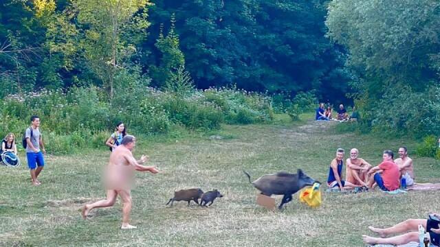 Motivul pentru care un bărbat complet dezbrăcat a alergat după un mistreț, prin pădure. Imagini virale - Imaginea 3