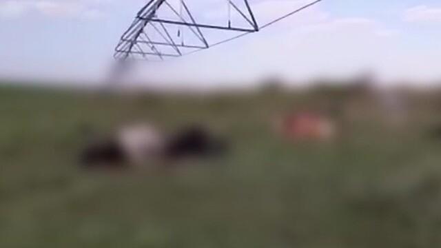 Descoperire macabră pe un câmp din Buzău. Oamenii au rămas îngroziți: \