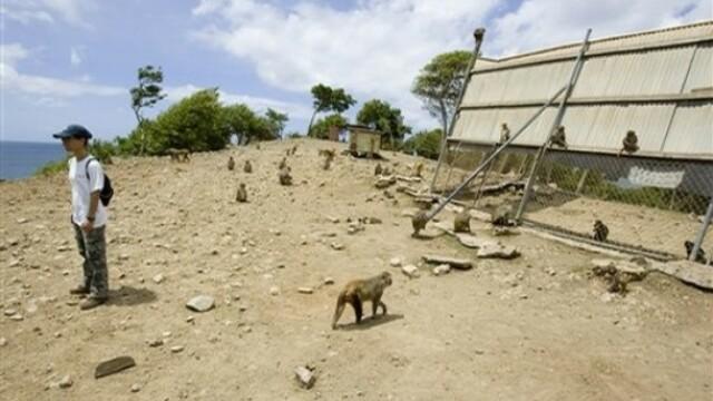 Macel la Puerto Rico! Autoritatile au decis sa extermine maimutele