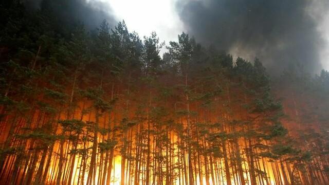 Australia, bantuita de rele. Inundatii si incendii forestiere