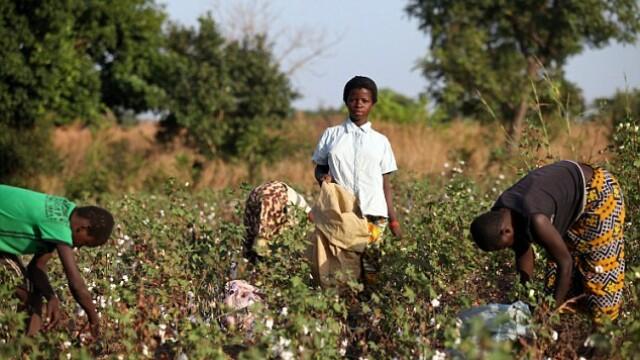 Victoria's Secret a folosit bumbac cules din ferme unde erau exploatati copii africani - Imaginea 1