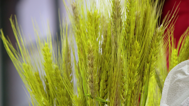 Crengi de copac sau spic de grau fosforescent. Cum arata nuielusa lui Mos Nicolae in 2013. FOTO - Imaginea 7