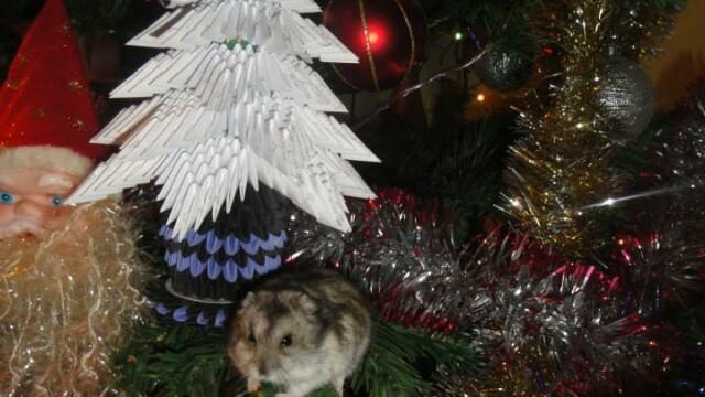Bradul eco, bradul de 3 lei si bradul cu carnati. Craciunul pomilor decorati pentru un LIKE si SHARE - Imaginea 26
