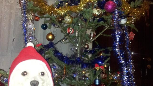 Bradul eco, bradul de 3 lei si bradul cu carnati. Craciunul pomilor decorati pentru un LIKE si SHARE - Imaginea 39