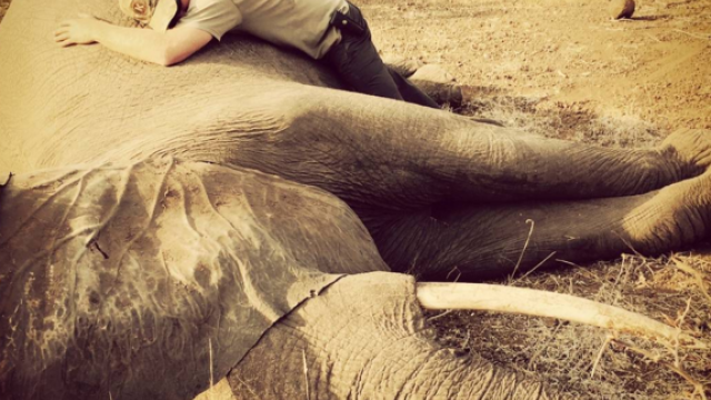 Printul Harry, imbratisand un elefant in Africa de Sud. Imaginile emotionante fac inconjurul lumii