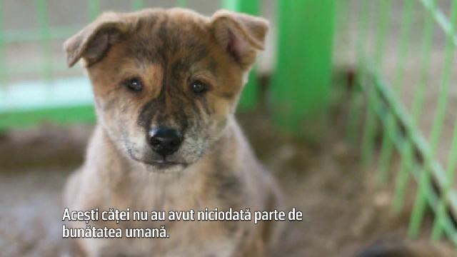 Au fost salvati de la moarte dintr-o ferma ilegala de carne de caine, aflata in Coreea de Sud. Unde au ajuns acum catelusii