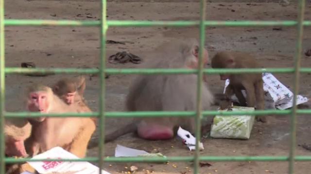 Crăciunul animalelor, la Grădina Zoologică din Ploiești. Mai mulți copii au împărțit daruri animalelor