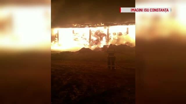 Incendiu la herghelia din Mangalia. Ce au păţit caii