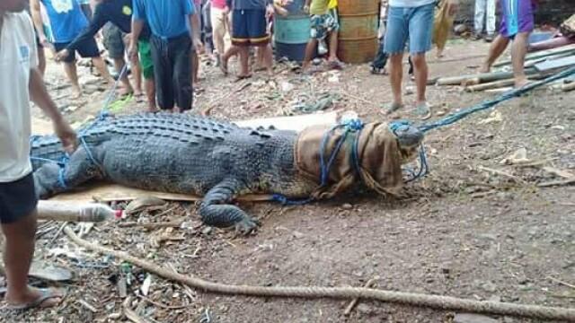 crocodil urias prins in Filipine