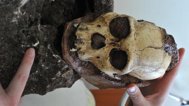 schelet, Australopithecus