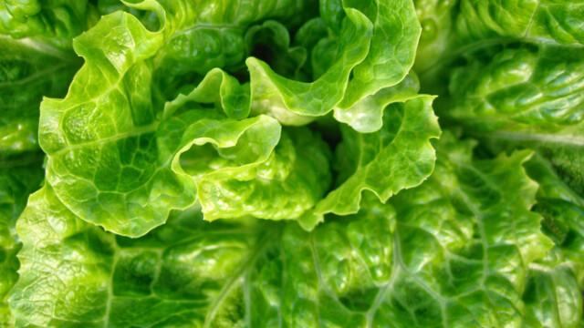 salata verde