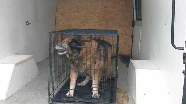 Un câine speriat de petarde și-a atacat stăpânul pe stradă, în București, în a doua zi de Crăciun