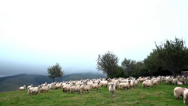 """Peisaje de poveste, la Mărginimea Sibiului. """"Este atmosfera asta a satului, liniștea, timpul care curge mai încet"""""""