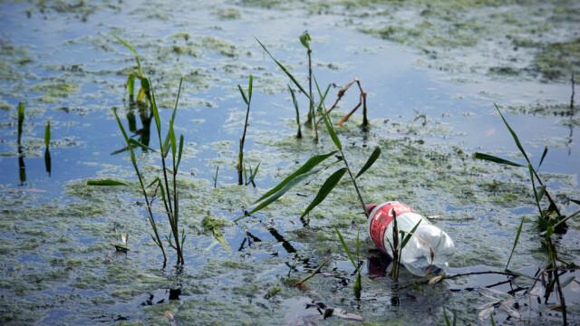 Coca Cola, cel mai mare poluator cu plastic din lume, pentru al treilea an la rând